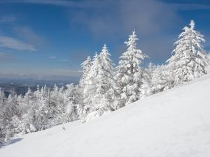 Snowy Trees on the Slopes of Mount Cardigan, Canaan, New Hampshire, USA by Jerry & Marcy Monkman