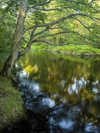 The Taunton River in Bridgewater, Massachusetts, Usa by Jerry & Marcy Monkman