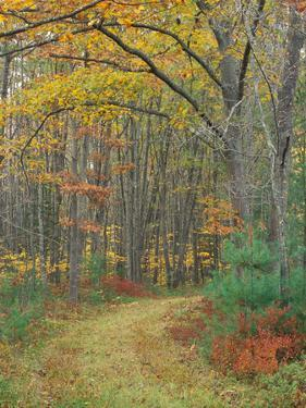 Tractor Road in the Woods on the Steele Farm, Kennebunkport, Maine, USA by Jerry & Marcy Monkman