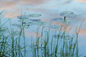 Water Lilies and Clouds, Lone Jack Pond, Northern Forest, Maine by Jerry & Marcy Monkman
