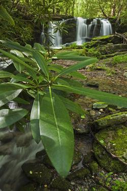 Waterfalls, Rhododendron Creek by Jerry Whaley