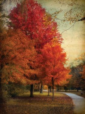 Among the Maples by Jessica Jenney