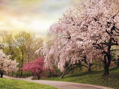 Asian Cherry Grove by Jessica Jenney