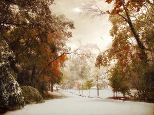 Autumn Greets Winter by Jessica Jenney