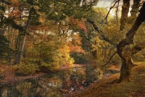 Autumn's Edge by Jessica Jenney