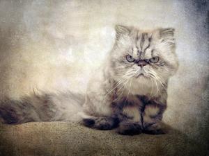 Cranky Cat by Jessica Jenney