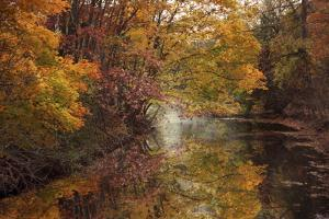 November Reflections by Jessica Jenney
