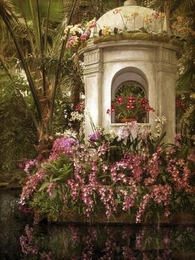 The Orchid Show by Jessica Jenney