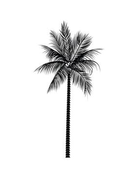 Black Palm by Jetty Printables