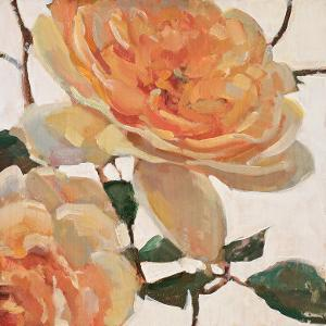 Tangerine Dream I by Jill Barton