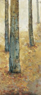 Tranquil Forest I by Jill Barton