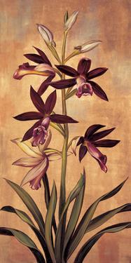 Burgundy Orchid by Jill Deveraux