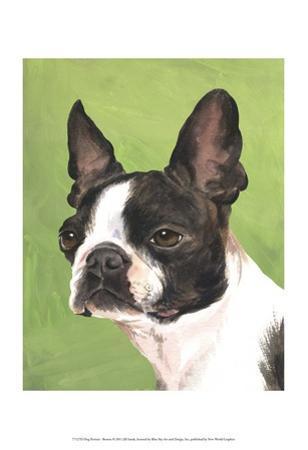 Dog Portrait, Boston