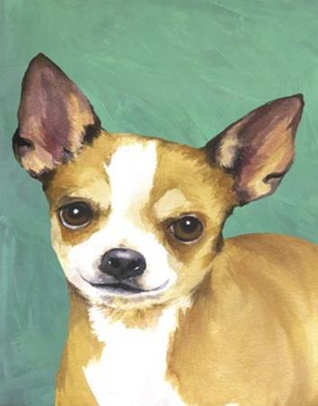 Dog Portrait, Chihuahua