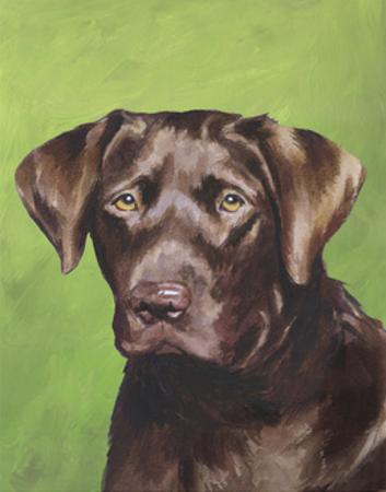 Dog Portrait, Chocolate