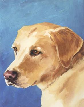 Dog Portrait, Yellow Lab by Jill Sands