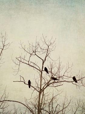 Black Birds in a Tree by Jillian Melnyk