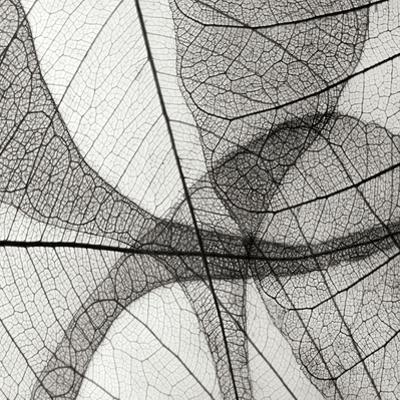 Leaf Designs III BW by Jim Christensen