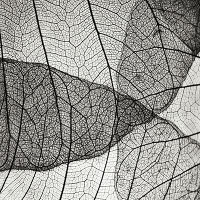 Leaf Designs IV BW by Jim Christensen