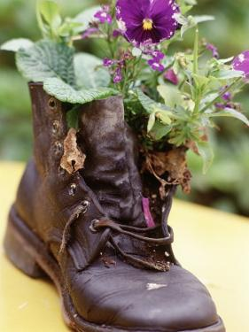 Flower Boot, Country Village Shops and Cafes, WA by Jim Corwin