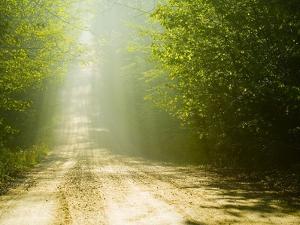 Rural Road by Jim Craigmyle