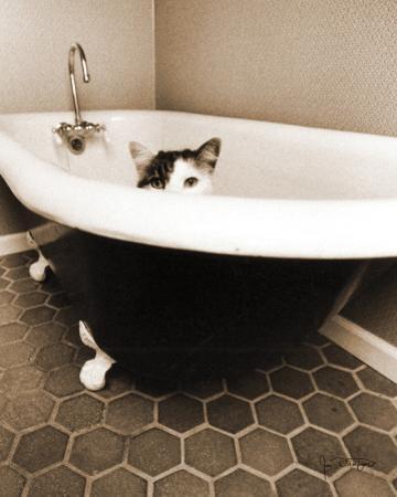 Kitty III by Jim Dratfield