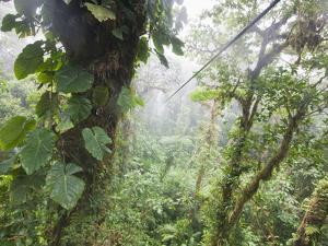 Monteverde Cloud Forest Reserve, Selvatura Adventure Park, Costa Rica by Jim Goldstein