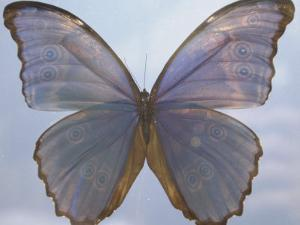 Butterfly with Open Wings by Jim McGuire