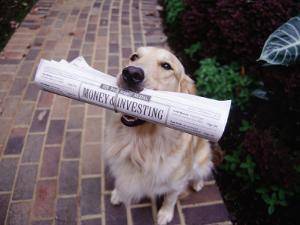 Golden Retriever with Newspaper in its Mouth by Jim McGuire