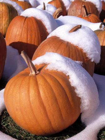 Pumpkins in Snow by Jim McGuire