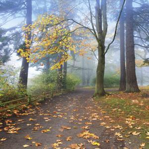 Autumn Walk by Jim Nilsen