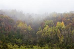 Fog Develops over a Valley of Trees in Fall Foliage by Jim Reed