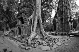 Lichen and Strangler Fig Trees Engulf Temple Ruins at Ta Prohm Temple by Jim Ricardson