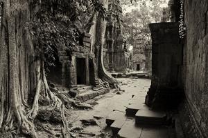 Strangler Fig Trees and Lichen Engulf Temple Ruins at Ta Prohm Temple by Jim Ricardson