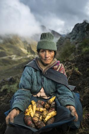 A Farmer Harvests Varieties of Potatoes to Sell at Market by Jim Richardson