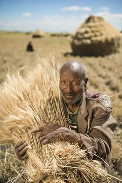 A Farmer Stacks Wheat in Ethiopia by Jim Richardson