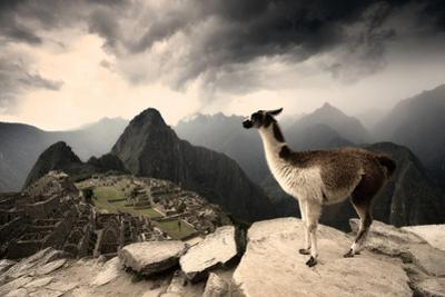 A Llama Overlooks the Pre-Columbian Inca Ruins of Machu Picchu by Jim Richardson