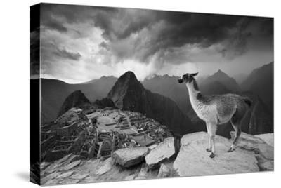 A Llama Overlooks the Pre-Columbian Inca Ruins of Machu Picchu