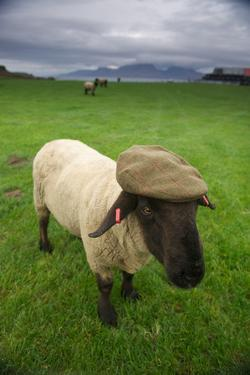 A Suffolk Sheep in a Tweed Cap Made from Suffolk Sheep Wool by Jim Richardson