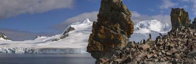 Chinstrap penguins on Half Moon Island. by Jim Richardson
