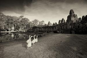 Geese Walk on the Grounds of the 12th Century Temple, Bayon by Jim Richardson