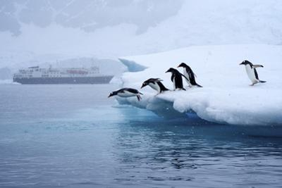 Gentoo Penguins Jump Off of the Ice into the Water Near a Cruise Ship by Jim Richardson