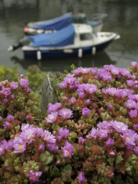 In Polperro, a Small Fishing Village, on the South Coast of Cornwall by Jim Richardson
