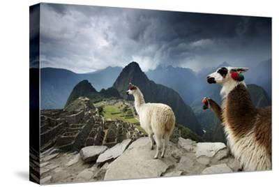 Llamas Overlook the Pre-Columbian Inca Ruins of Machu Picchu by Jim Richardson
