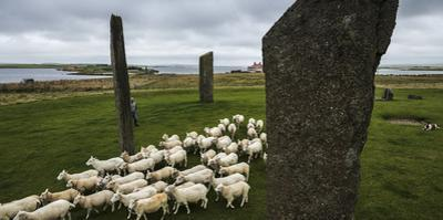 Sheep graze among the Stones of Stenness, a Neolithic sacred site. by Jim Richardson