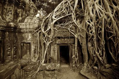 Strangler Fig Tree Roots Devour Temple Ruins at Ta Prohm Temple by Jim Richardson