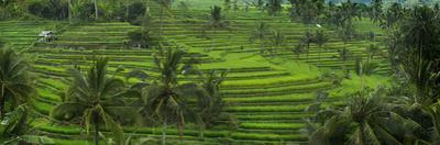 The Jatiluwih Rice Terraces by Jim Richardson