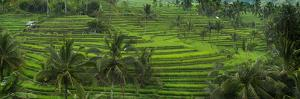The Jatiluwih Rice Terraces by Jim Richardson
