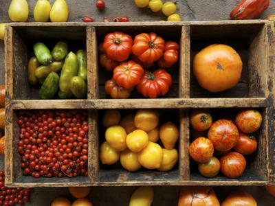 Tomato Varieties at the Seed Savers Exchange by Jim Richardson