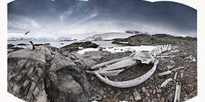 Whalebones on the Beach at an Old Whaling Station by Jim Richardson